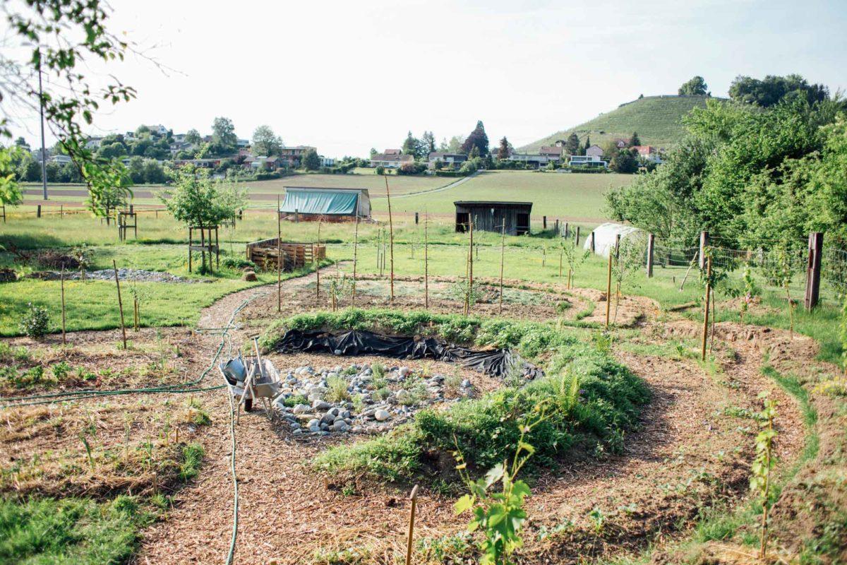 Hügelbeet und Kräutergarten