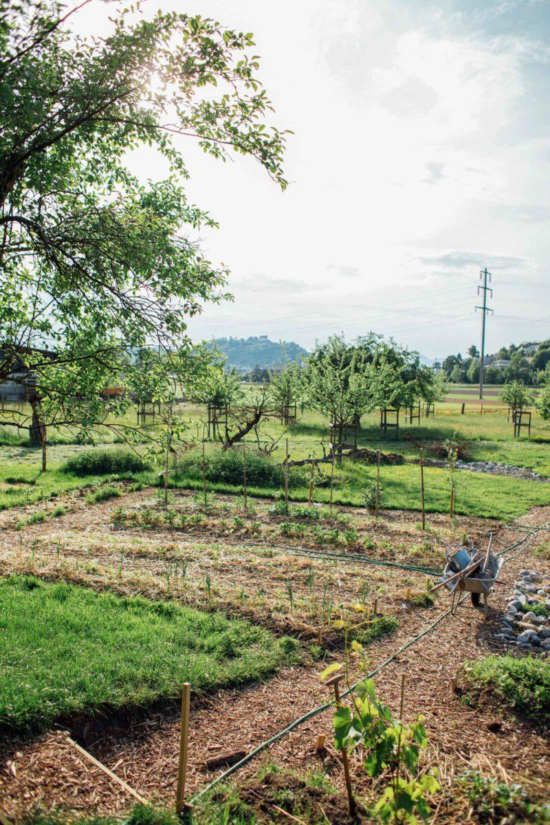 Gemüsebeete im Garten