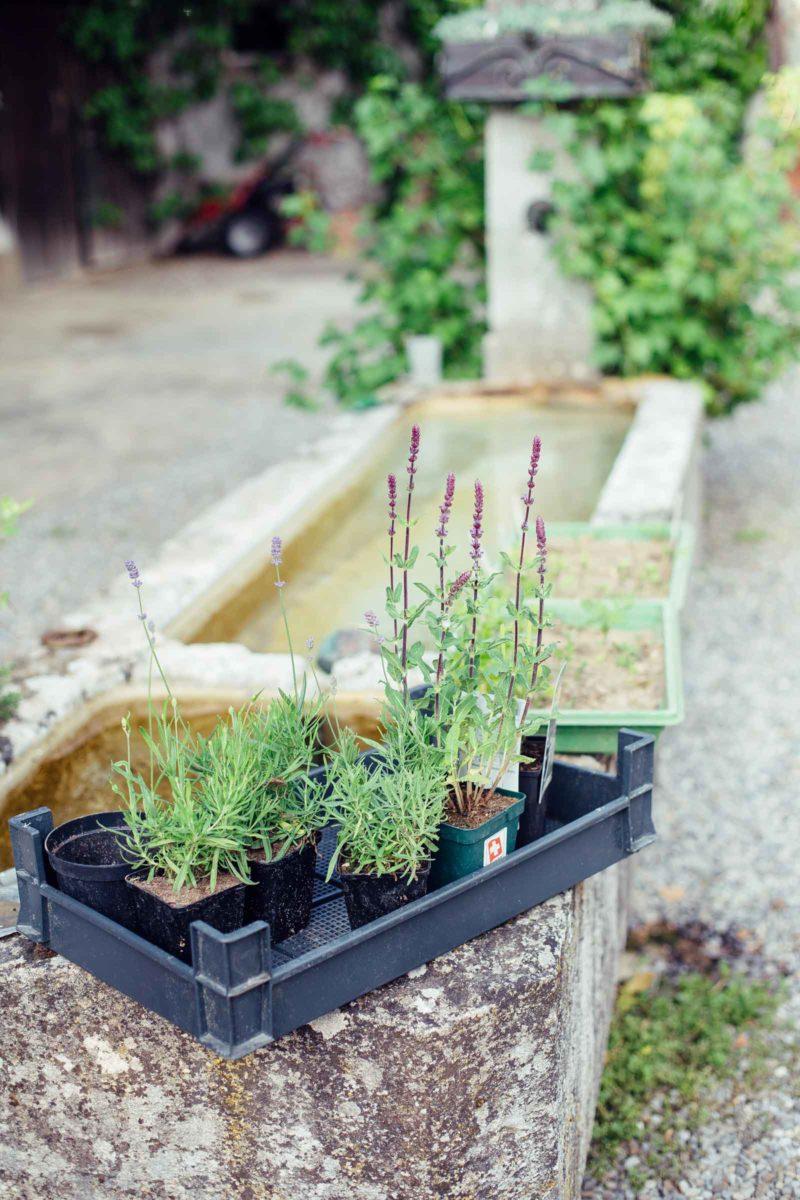 Kräuter stehen bereit für den Garten
