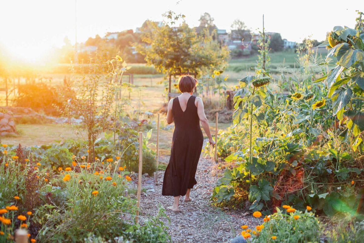 der Garten wird begutachtet