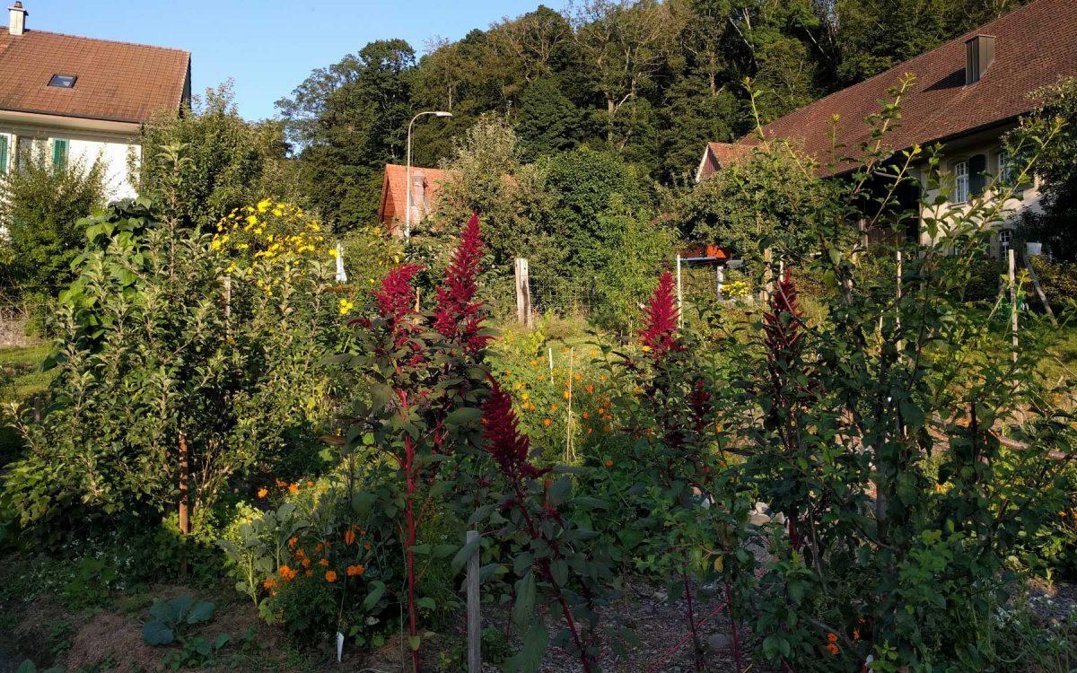 Blick in den Garten August 2019