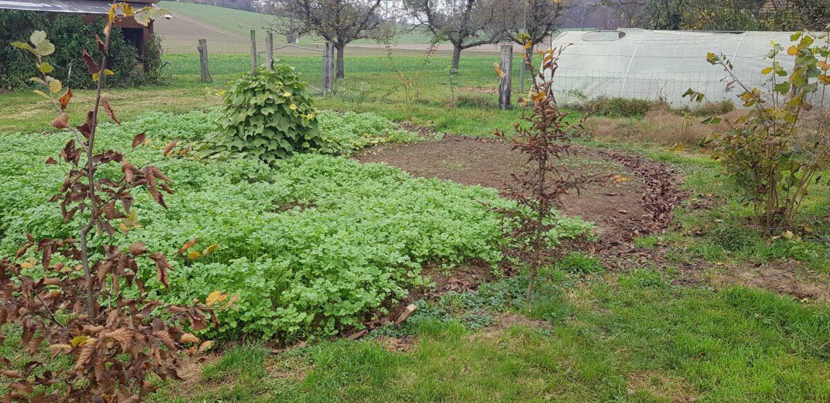 Wo im Sommer noch Kartoffeln standen ist jetzt die Gründungung am wachsen